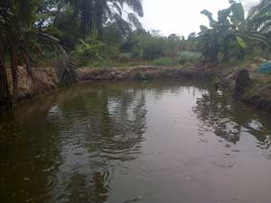 Earthen ponds in Ogun State Nigeria