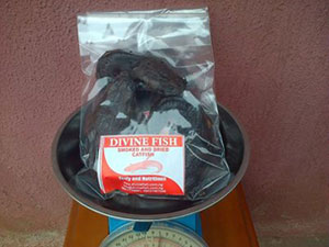 Pack of Processed Catfish from Divine Fish Farm, Lagos, Nigeria