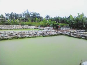 View of earthen ponds