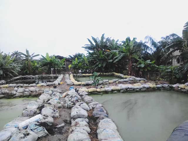 Earthen pond in Ikorodu